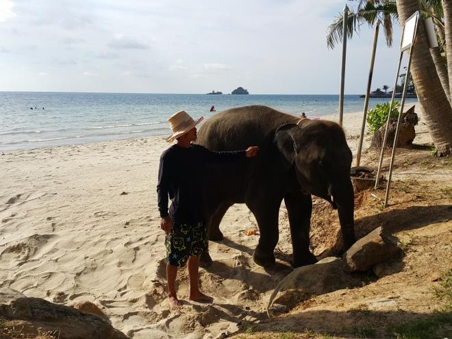 Elephant on Beach | Ko Chang, Thailand